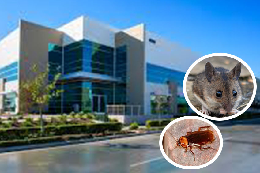 commercial pest solution